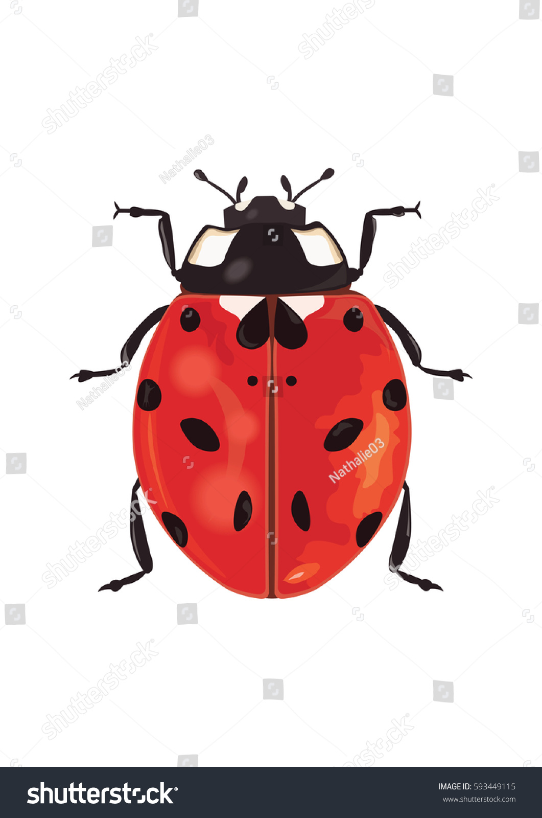 What Are Ladybugs A Symbol Of Choice Image - definition of