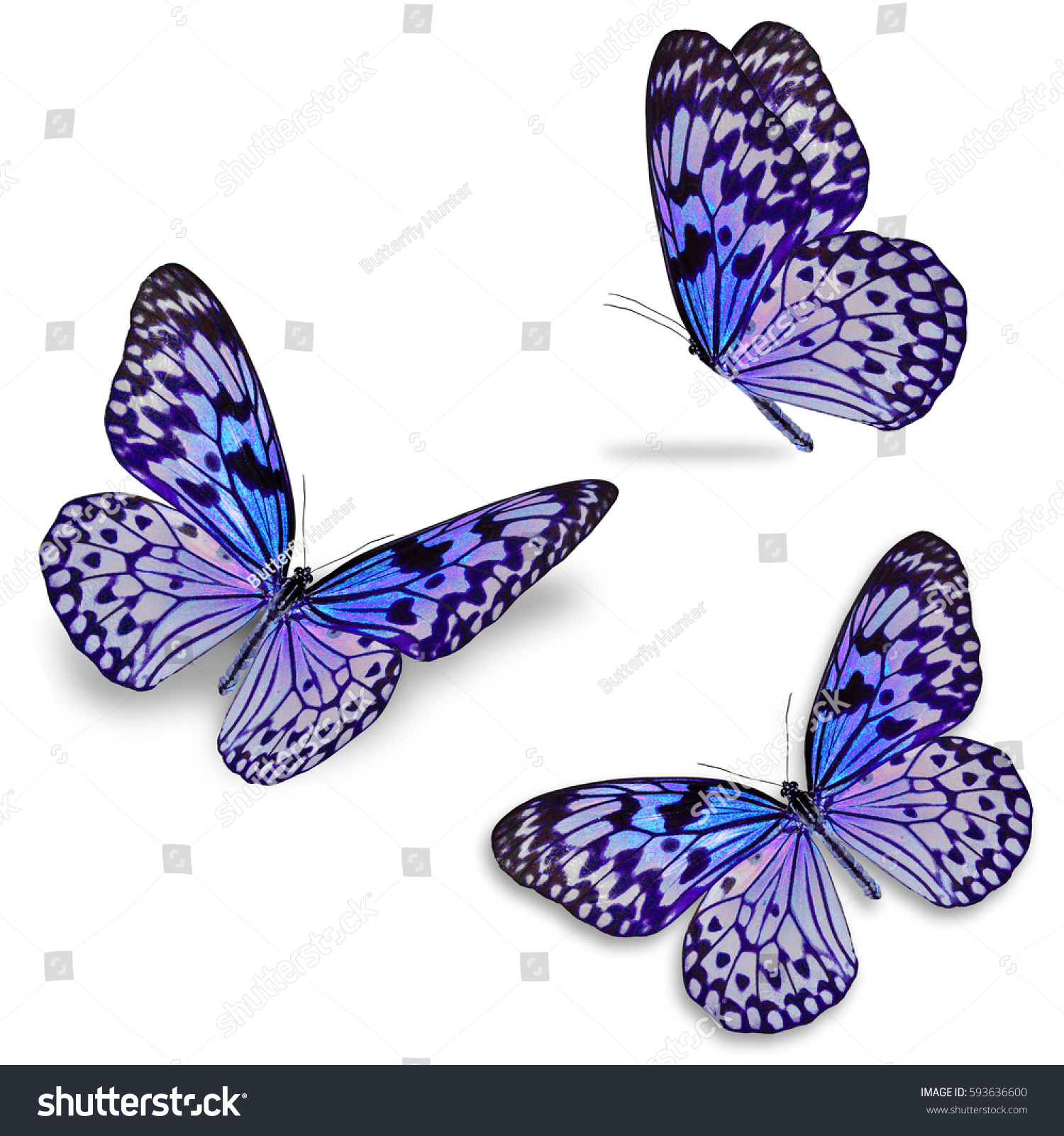 Beautiful Three Colorful Butterfly Isolated On Stock Photo 593636600 ...