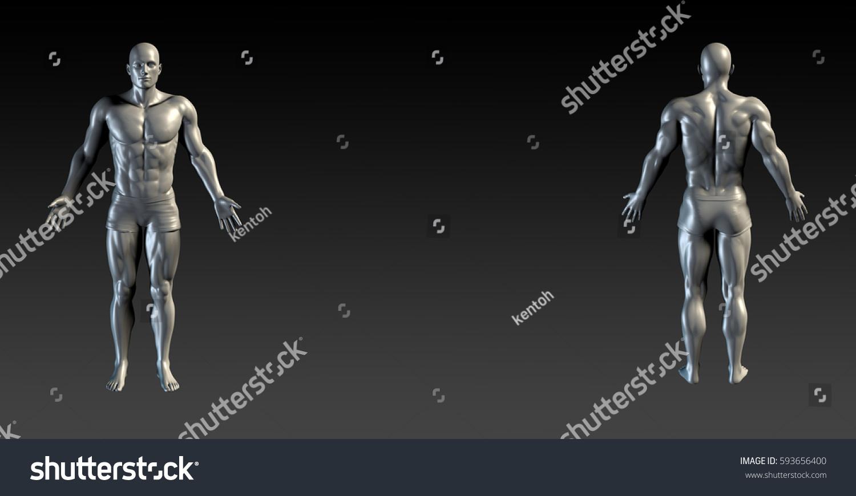 Human Body Presentation Background Medical Anatomy Stock Illustration 593656400