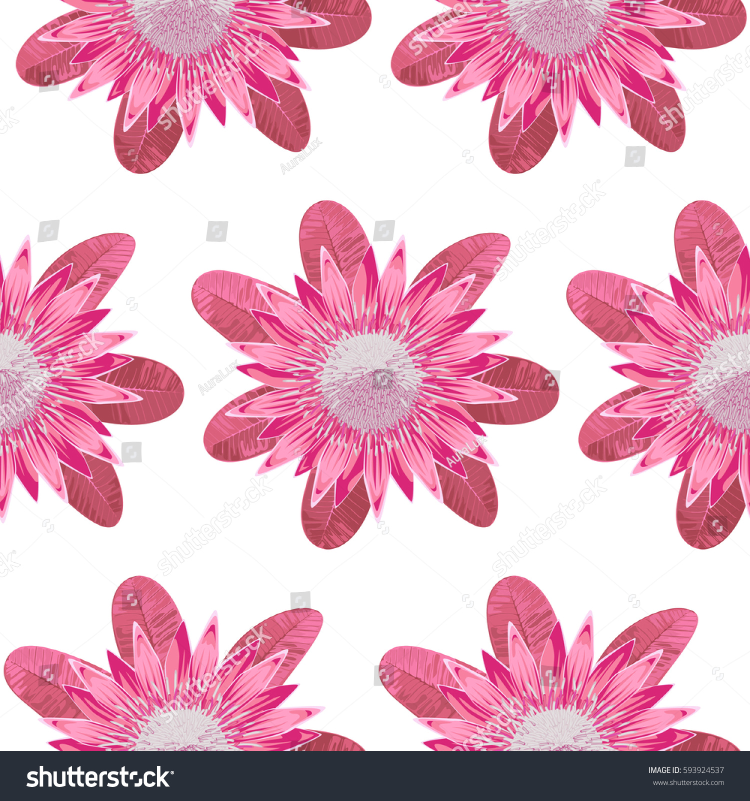 Seamless Pattern Tropical Pink Flower Protea Stock Vector Royalty