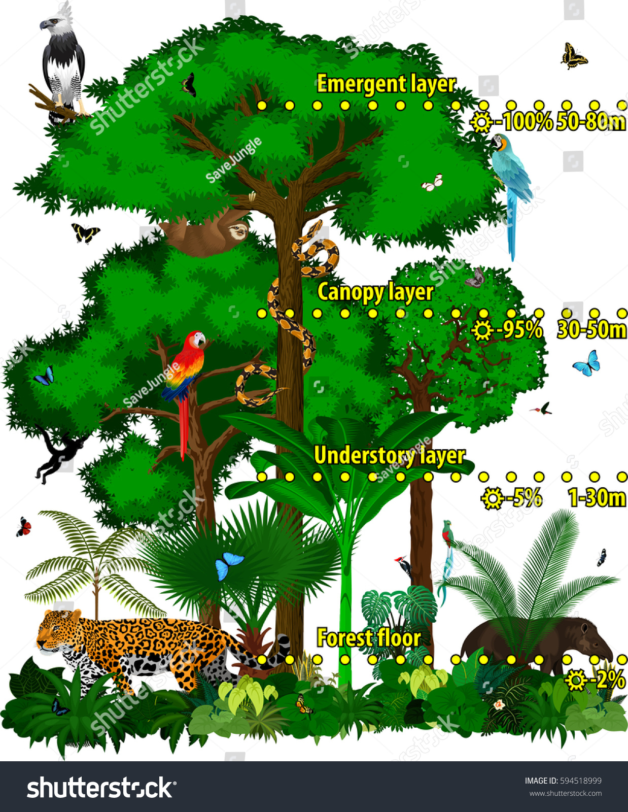 Rainforest jungle layers vector illustration. Vector Green Tropical Forest jungle with different animals.  sc 1 st  Shutterstock & Rainforest Jungle Layers Vector Illustration Vector Stock Vector ...