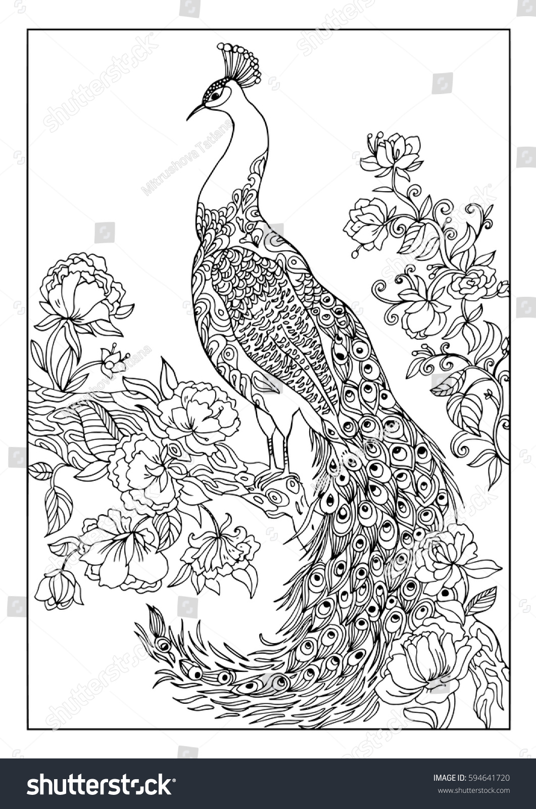 Peacock In Flowerscoloring Book For Adults Birdexoticoutline Drawing With