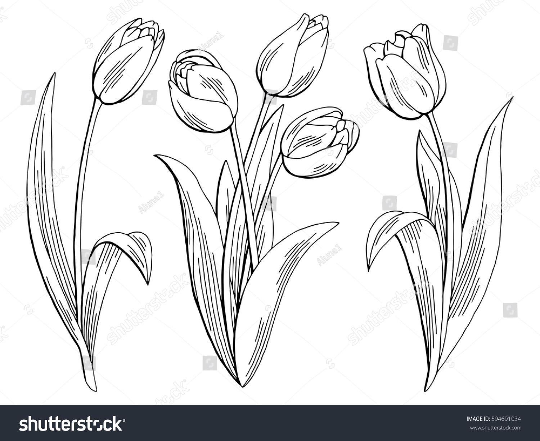 tulip flower graphic black white isolated stock vector 594691034