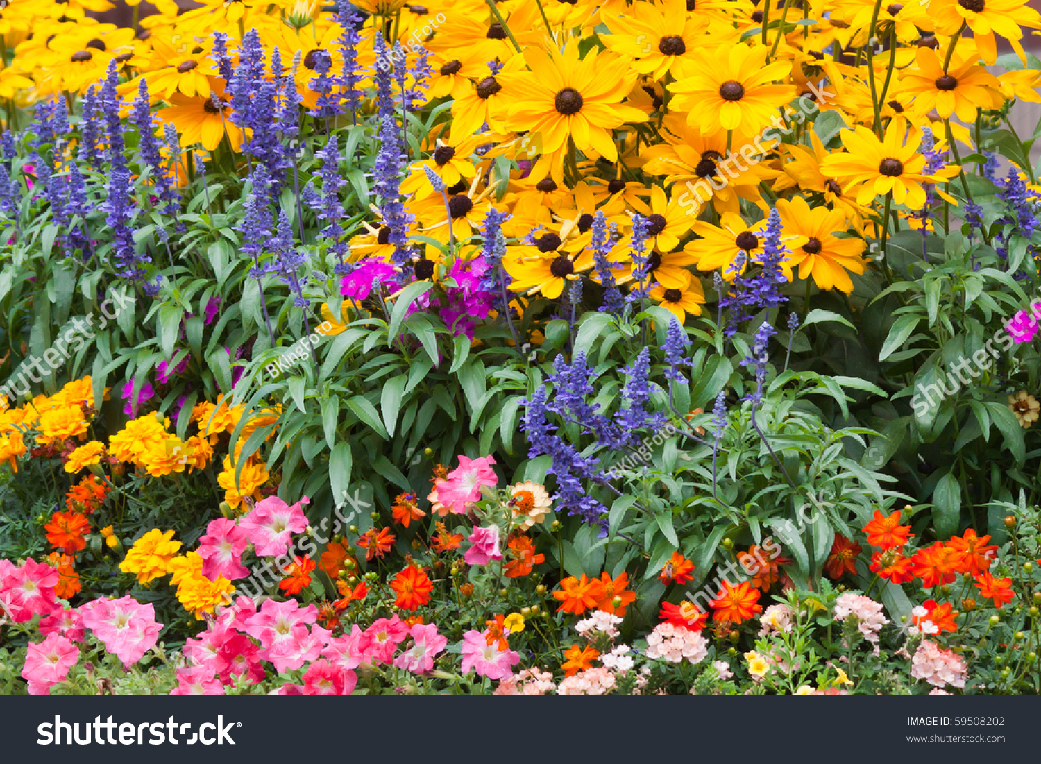 Colorful Flower Garden Yellow Blue Orange Stock Photo Edit Now