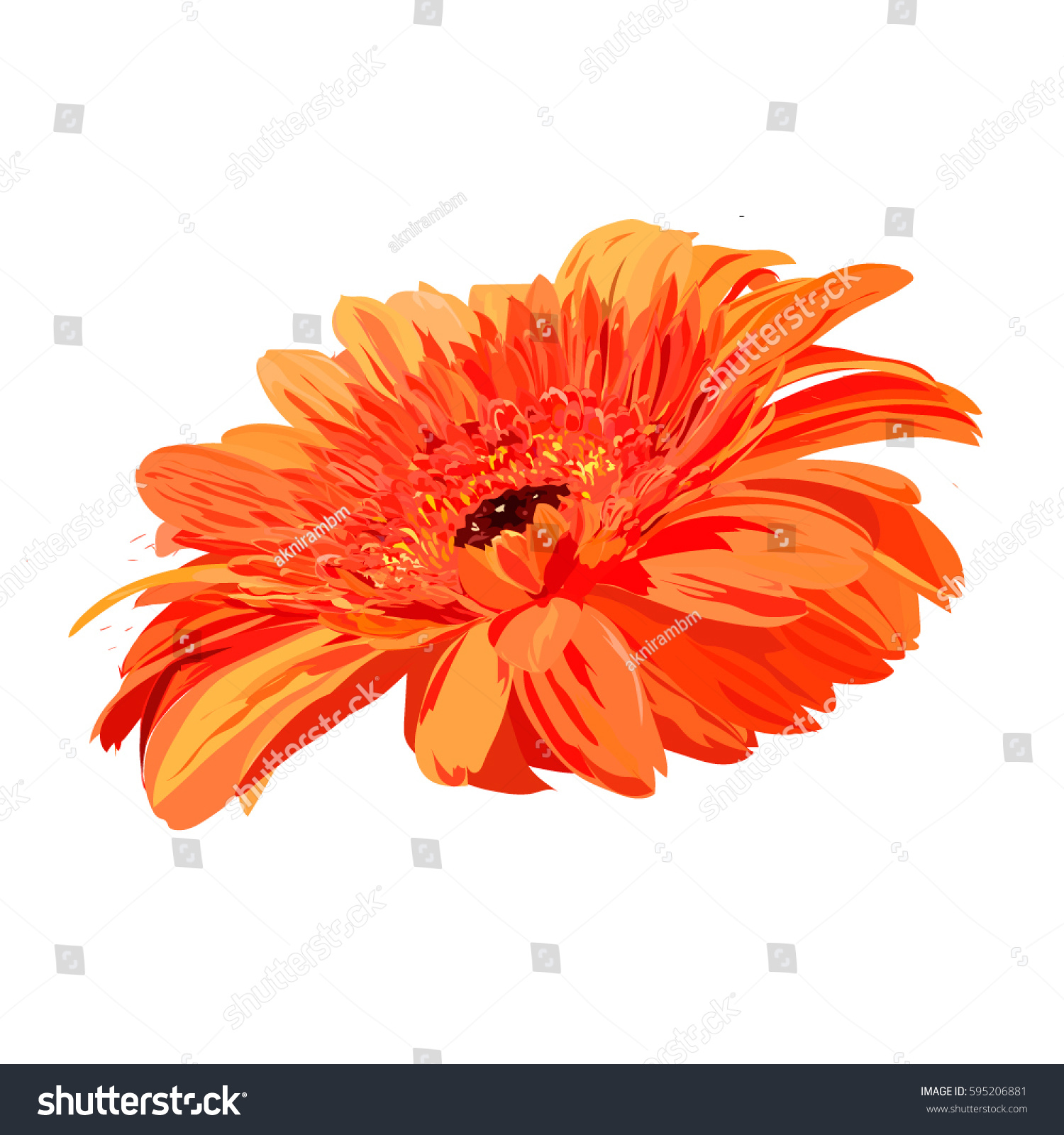 bright orange hand drawn gerbera. isolated vector flower for ...