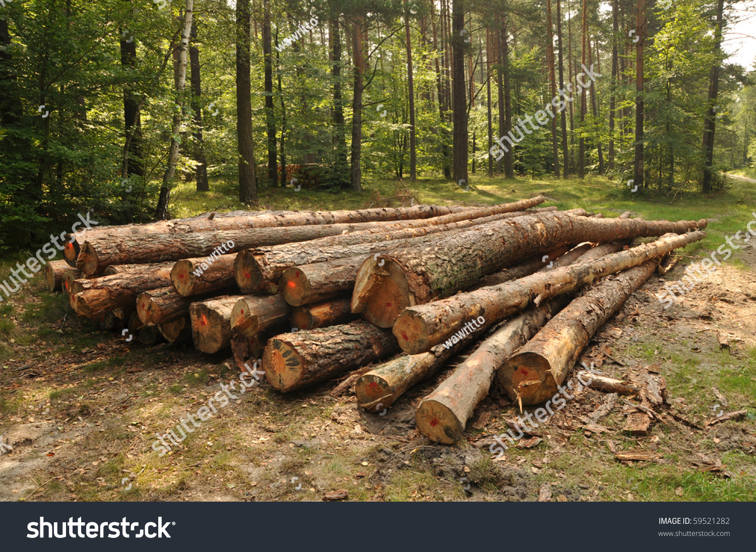 Pile Of Timber : Pile wood summer forest stock photo shutterstock