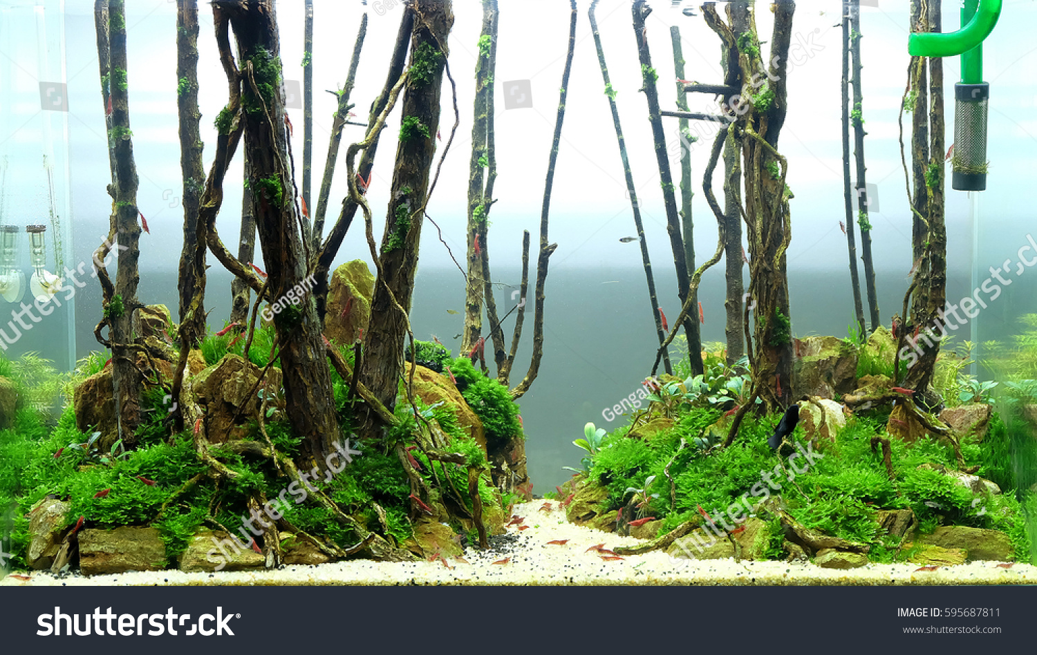 Aquascape Forest Style Stock Photo Edit Now 595687811
