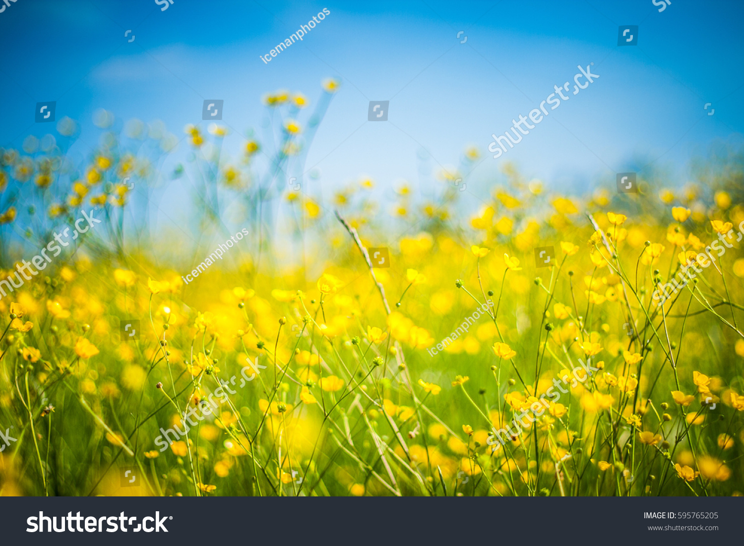 Close Nature Landscape Inspirational Mood Flowering Stock Photo
