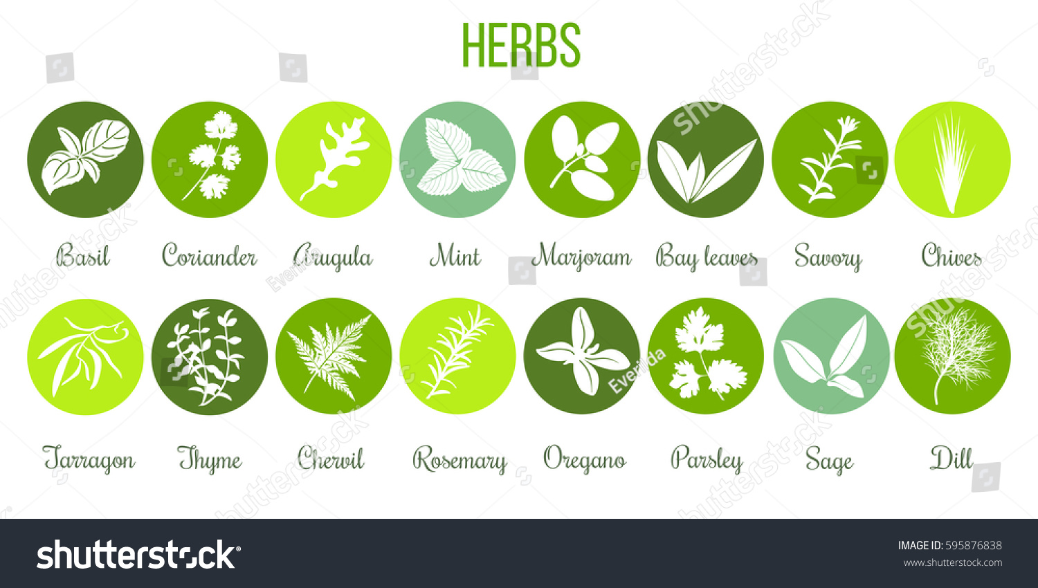 Big icon set of popular culinary herbs white silhouettes in color circles. Color background. Basil, coriander, mint, rosemary, sage, thyme, parsley etc. For cosmetics, store, health care, tag, label #595876838