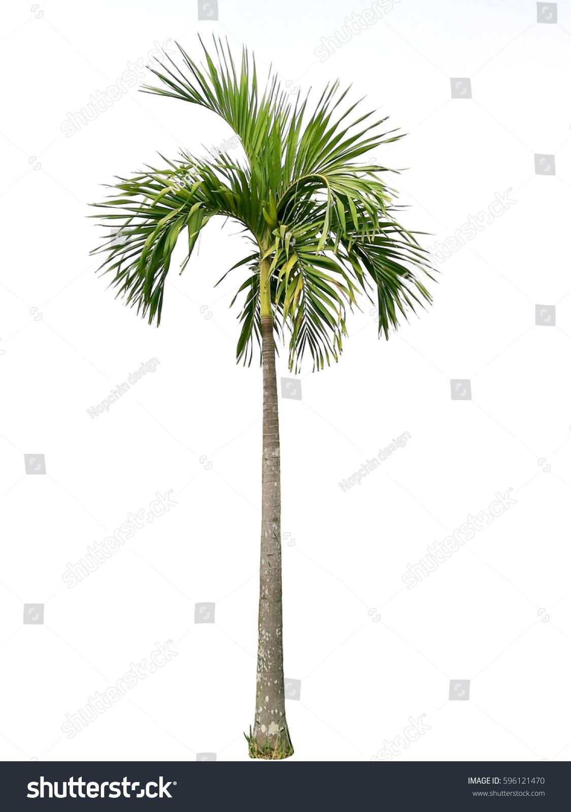 palm tree white - photo #40