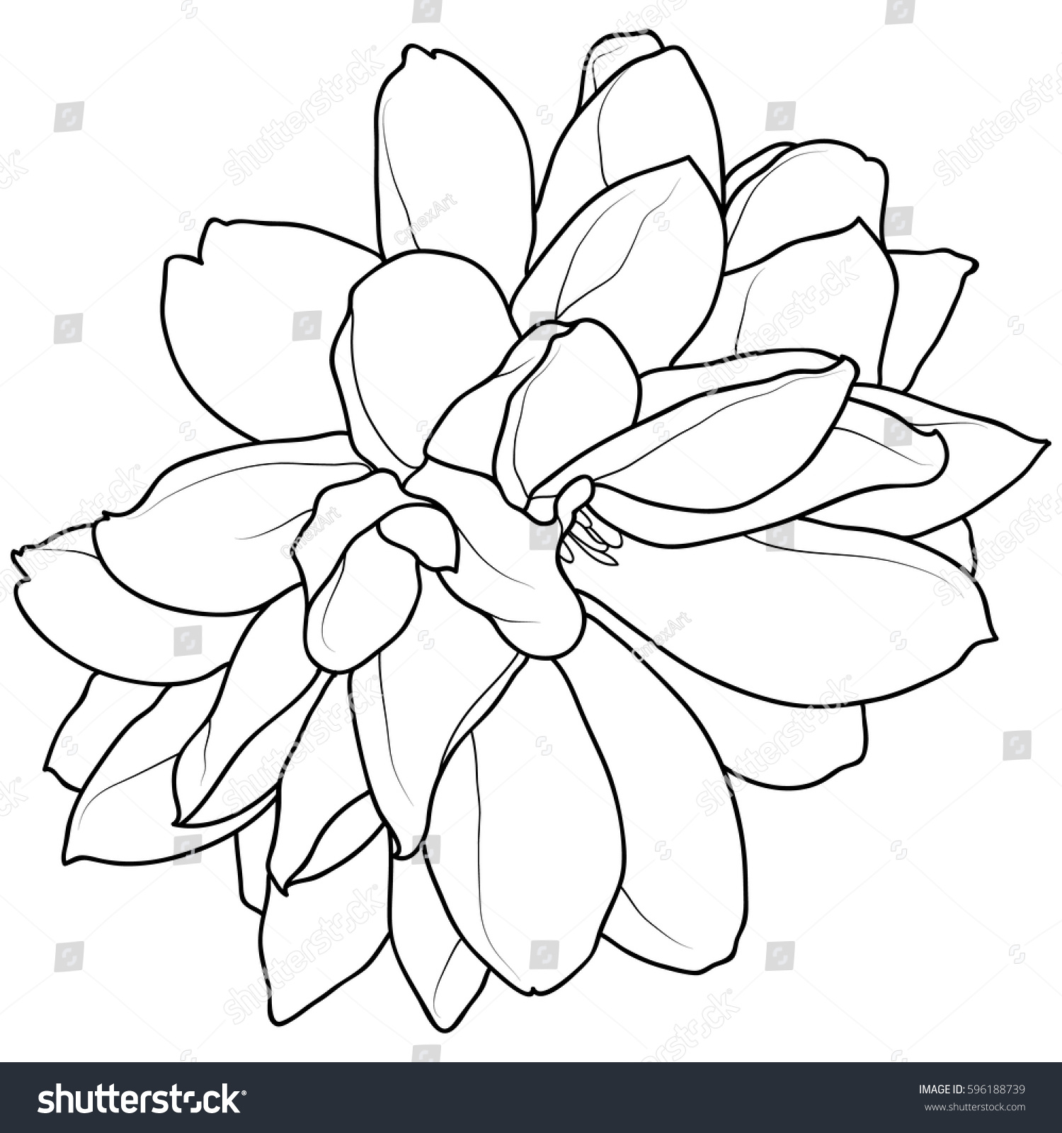 Hand Drawn Black White Flower Outline Stock Vector Royalty Free
