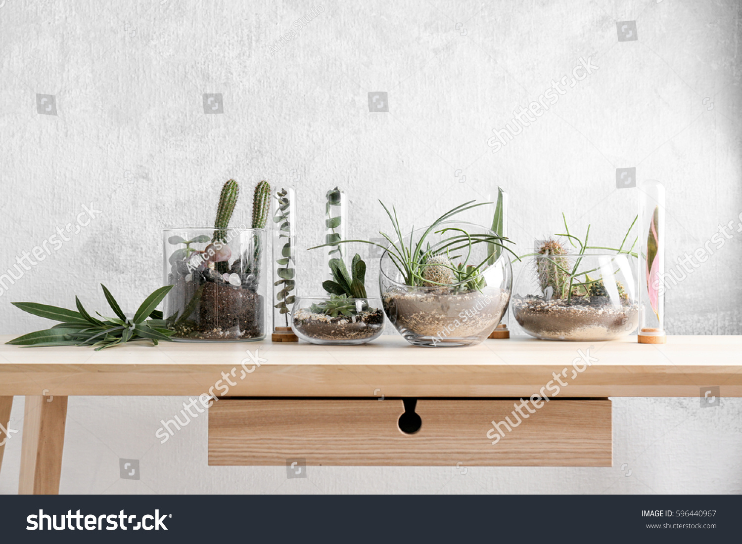 Florarium Glass Vases Succulents On Wooden Stock Photo ...