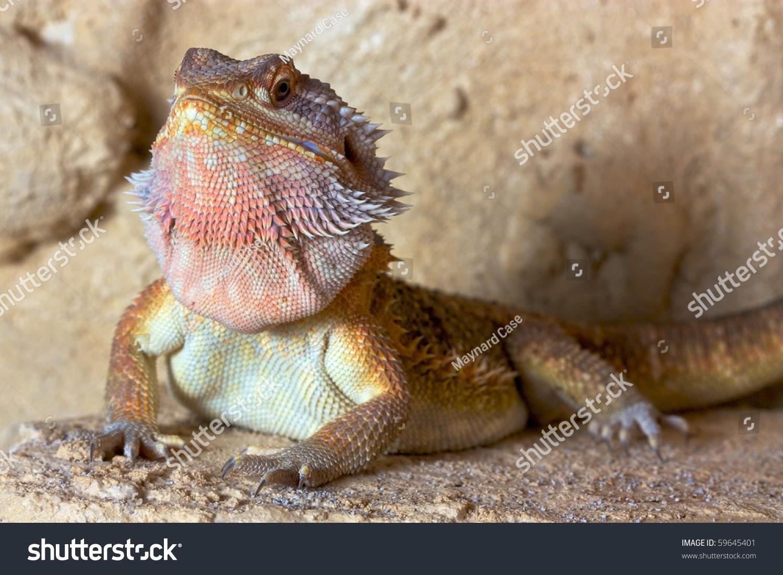 dragon bl z