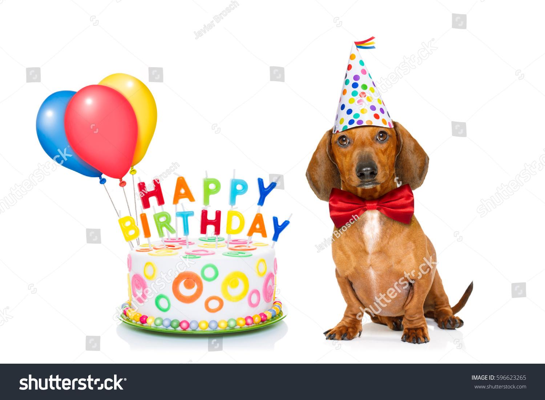 Dachshund Sausage Dog Hungry Happy Birthday Stock Photo Edit Now