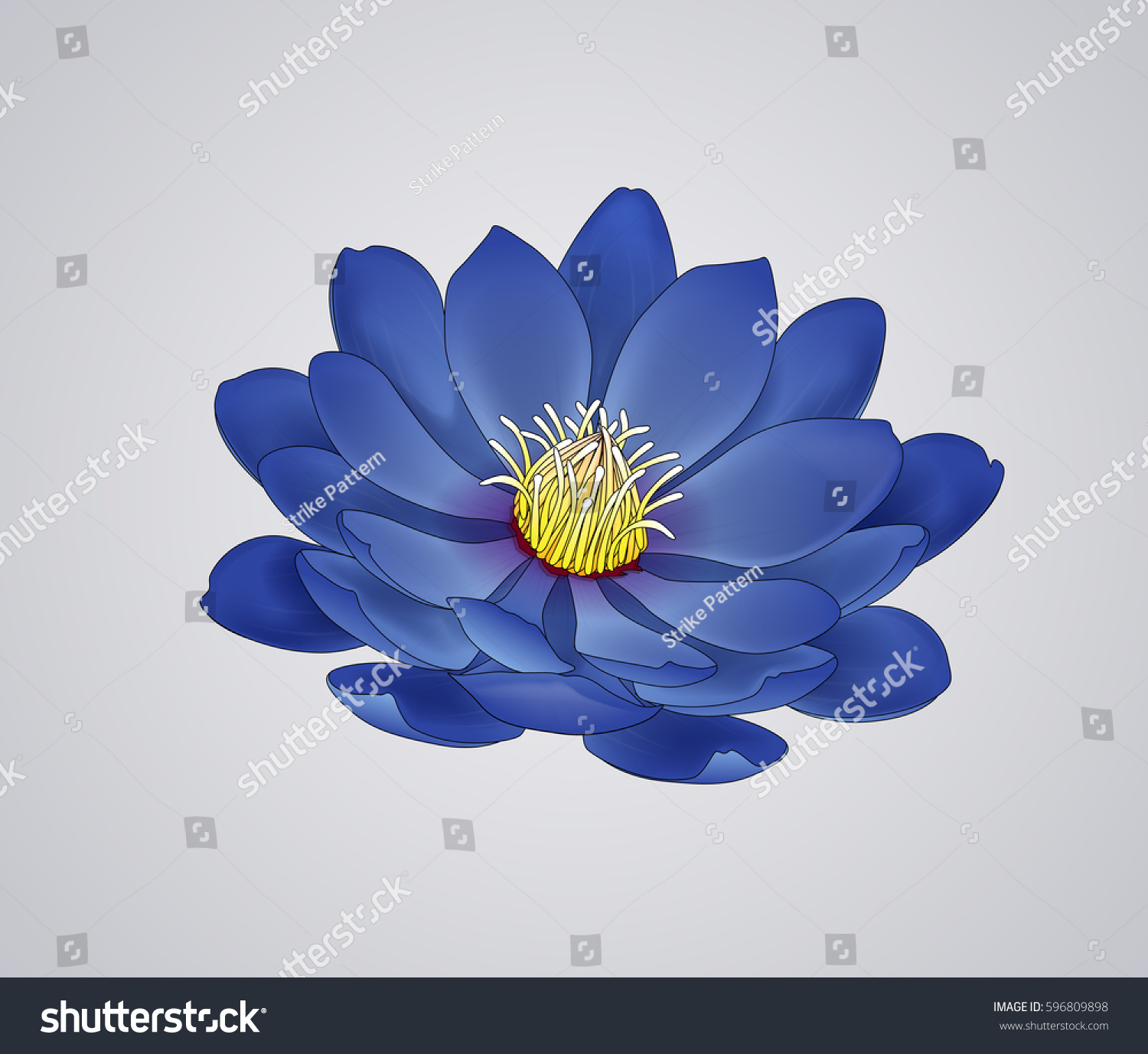 Blossoming beautiful blue waterlily lotus flower stock vector blossoming beautiful blue waterlily or lotus flower draw isolated izmirmasajfo