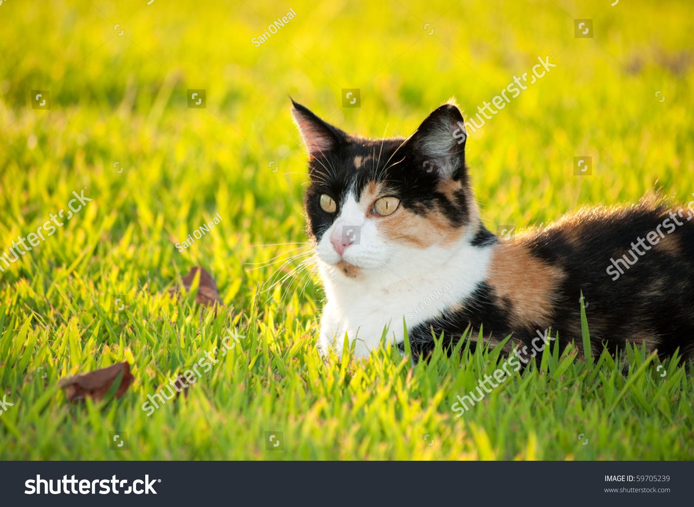 stock-photo-beautiful-calico-cat-in-gras