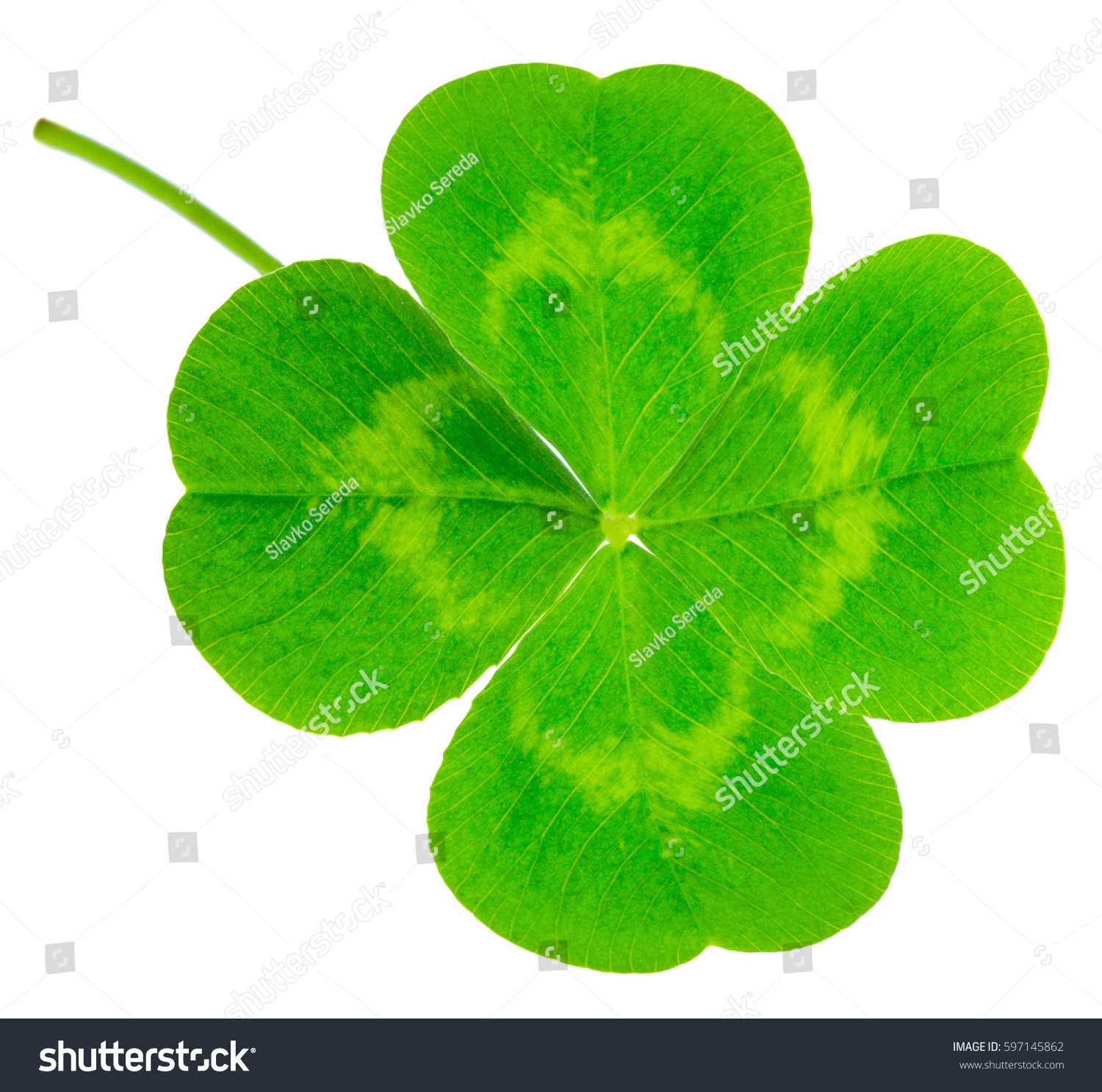 St patricks day symbol lucky shamrock stock photo 597145862 st patricks day symbol lucky shamrock clover green heart shaped leaves isolated on biocorpaavc Gallery