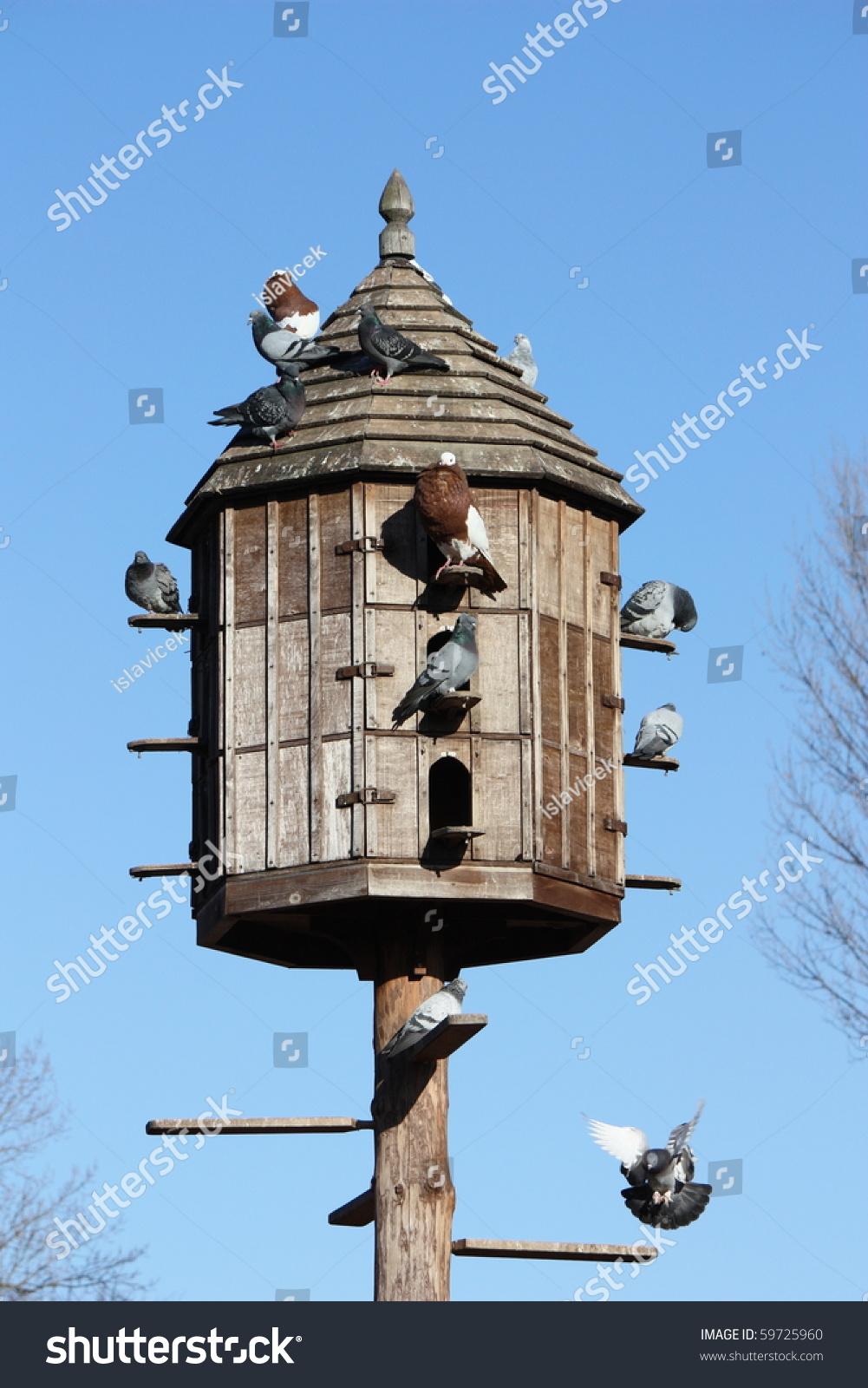 the pigeon place any awakening