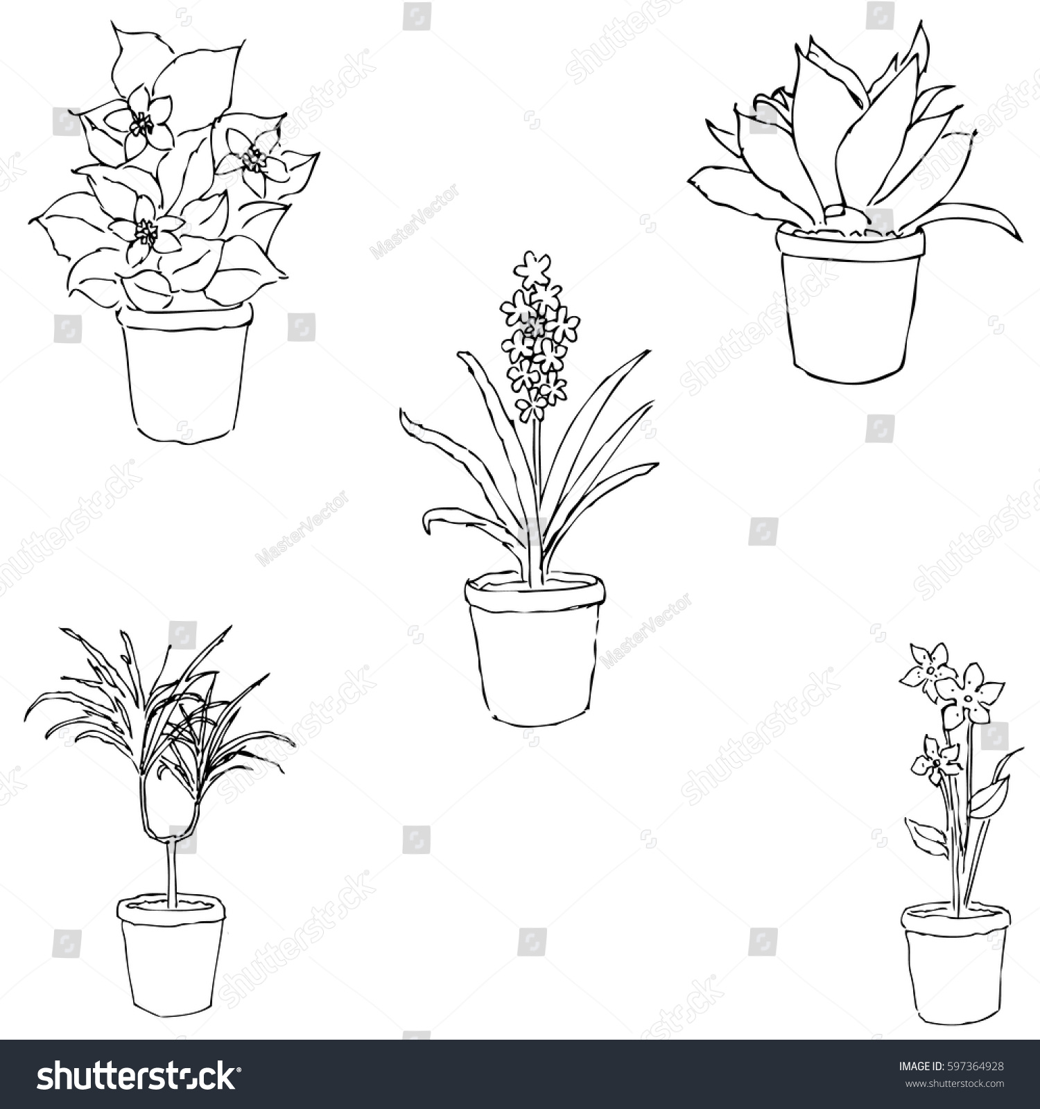 house plants drawing. houseplants sketch by hand pencil drawing vector image the house plants c