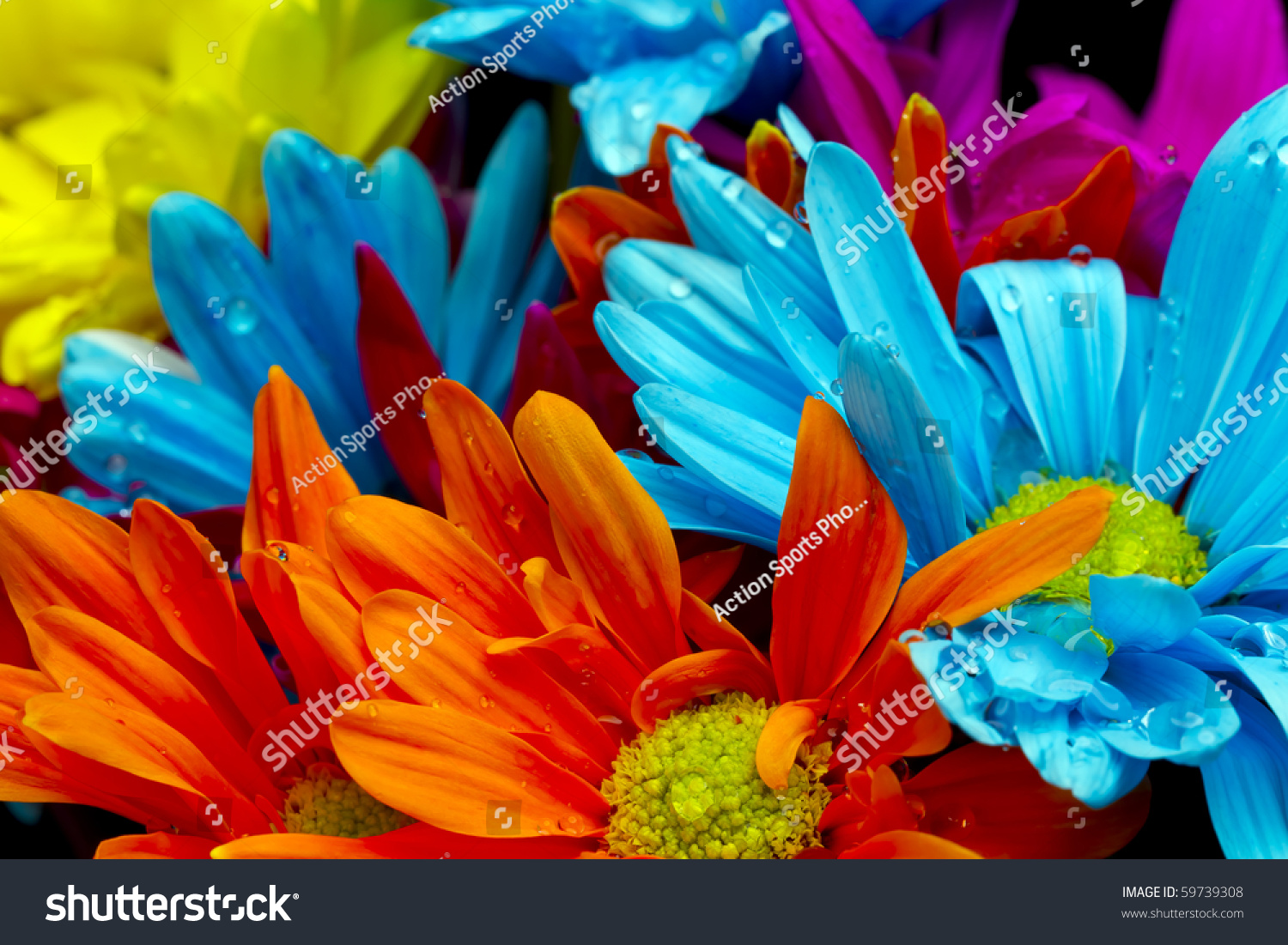 Colorful Flowers Against Black Background Studio Stock Photo ...