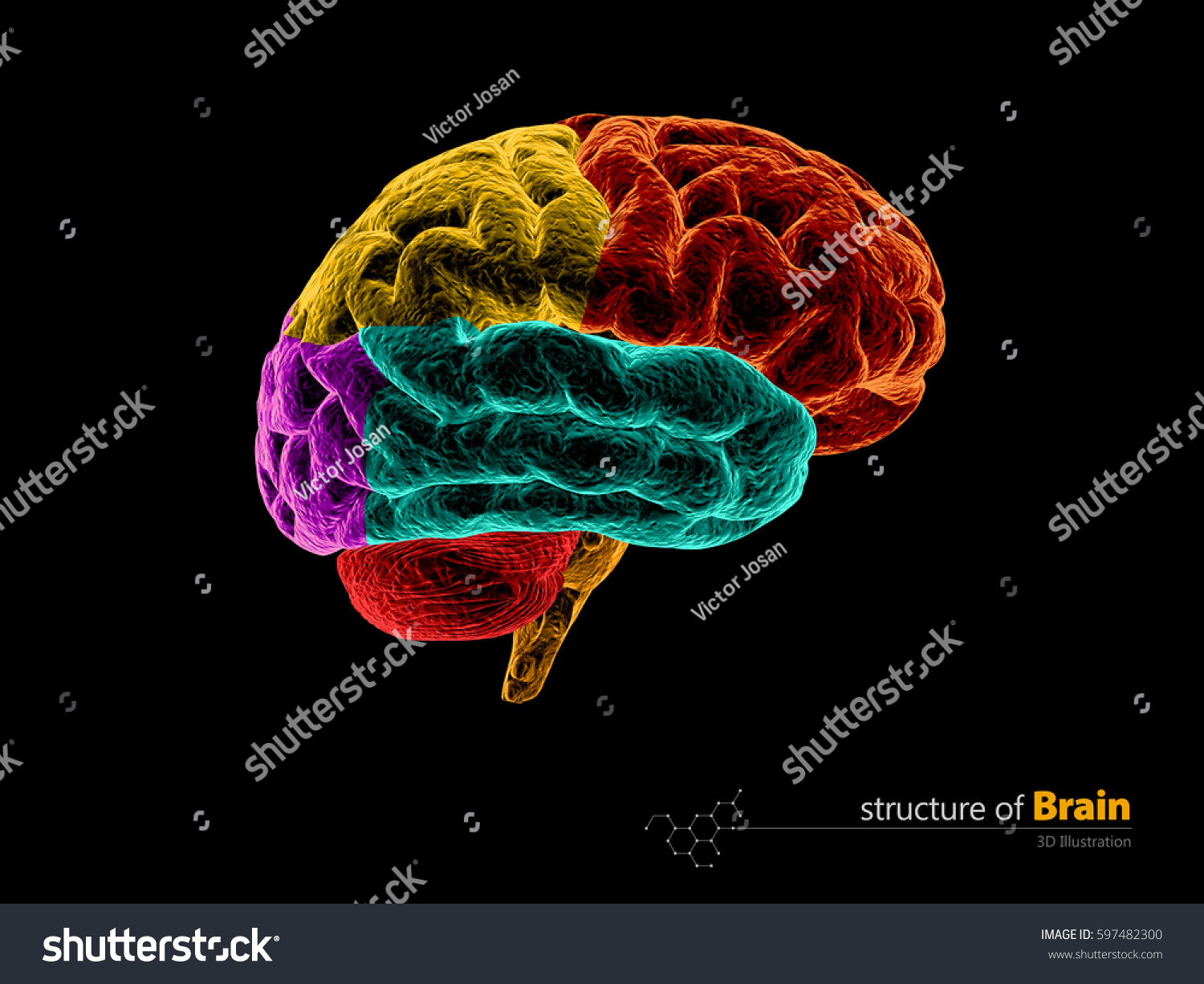Royalty Free Stock Illustration of Human Brain Anatomy Structure ...