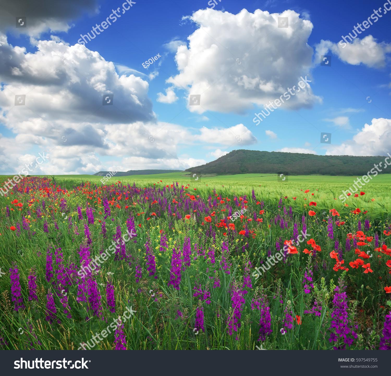 Beautiful Landscape Flowers Field Mountain Spring Stock Photo Edit
