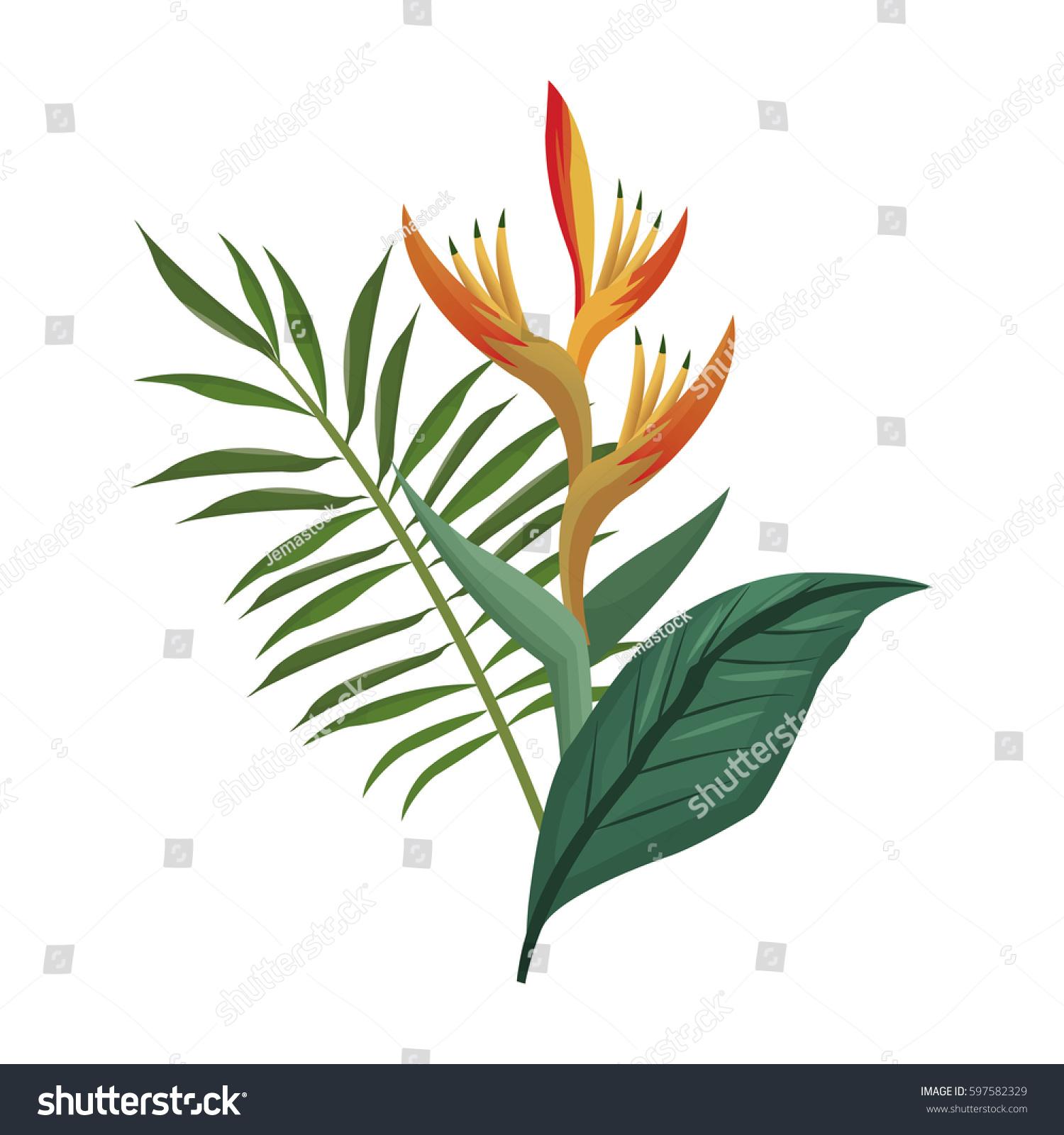Bird paradise flower leaves palm stock vector 597582329 shutterstock bird of paradise flower and leaves palm buycottarizona