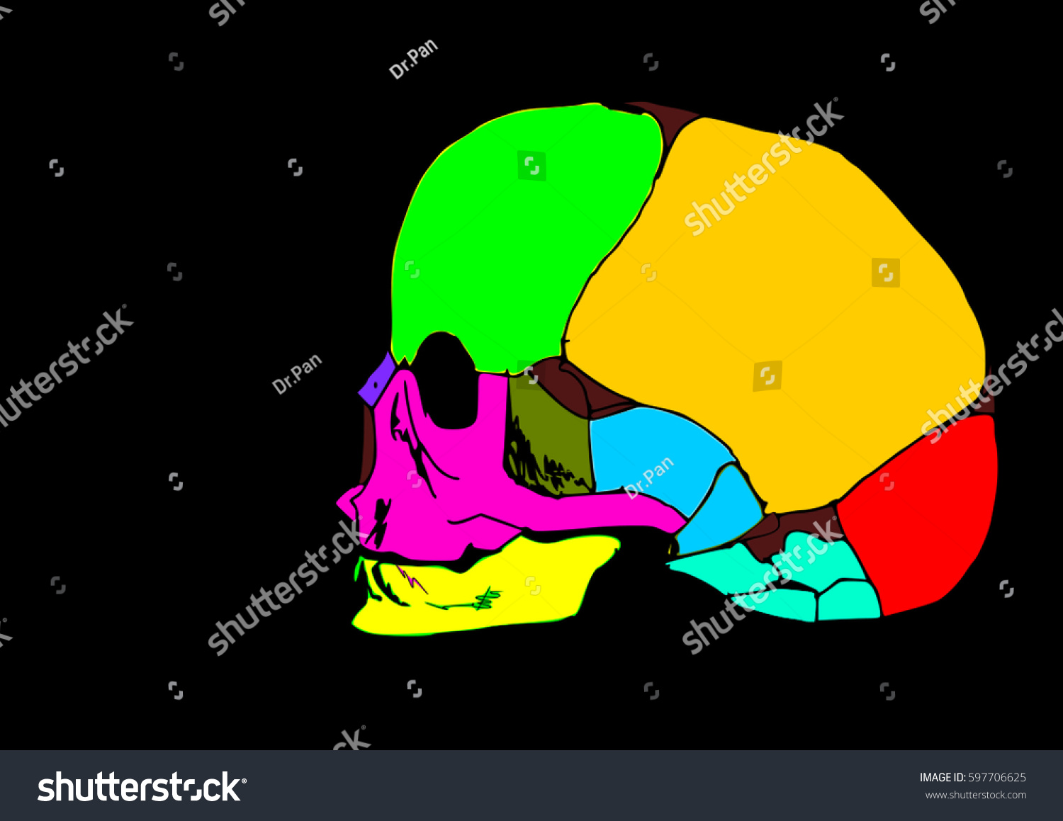 Baby Human Skull Anatomy Show Each Stock Illustration 597706625 ...