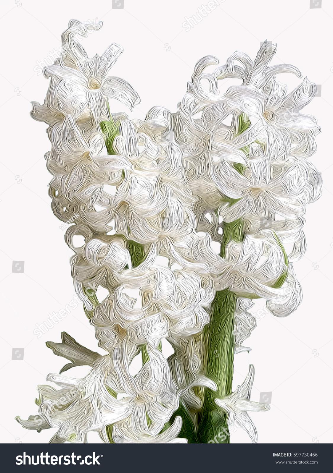 Plant Spring White Flower Hyacinth Name Cheerful Stock Illustration