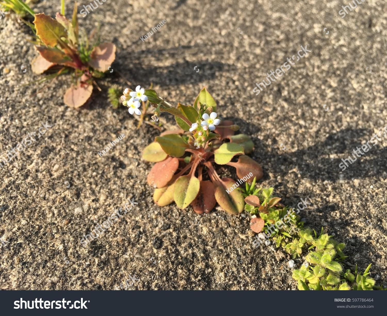 Small Cute Blue Flowers Boraginaceae Spring Stock Photo Royalty