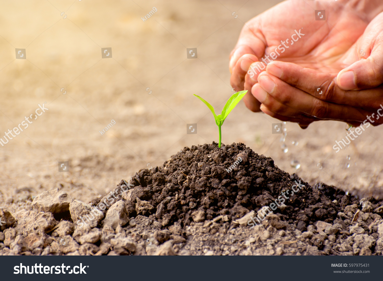 Young mans hands watering seedlings planted stock photo for Soil young s modulus