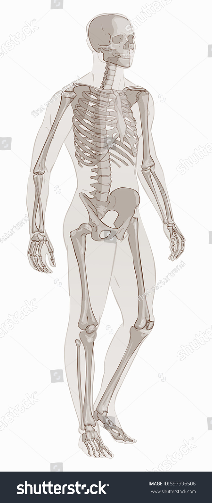 Human Body Parts Man Skeletal Anatomy Stock Vector (Royalty Free ...