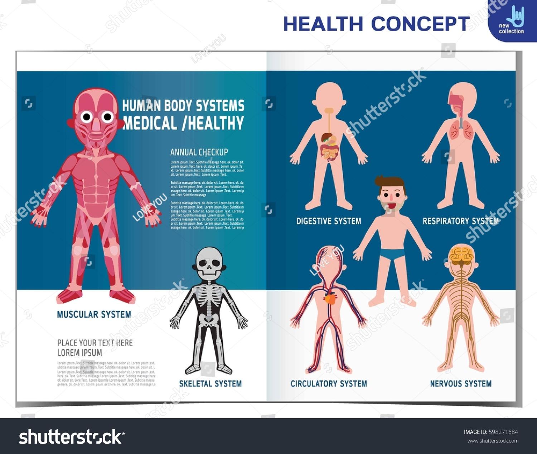Human Body Systems Anatomy Organ Muscular Stock Vector 598271684 ...