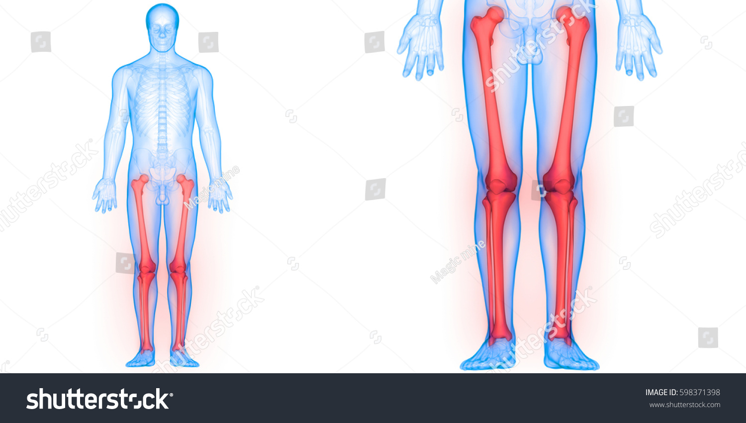 Human Body Bone Joint Pains Anatomy Stock Illustration 598371398 ...