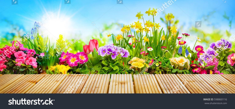 Spring Flowers Sunny Garden Stock Photo Edit Now 598860116