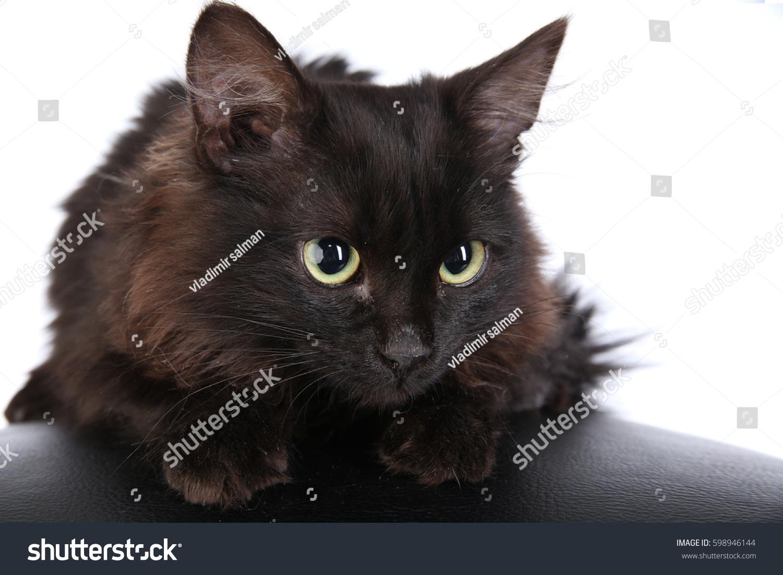 Closeup Portrait Angry Black Cat On Stock Photo 598946144 ...
