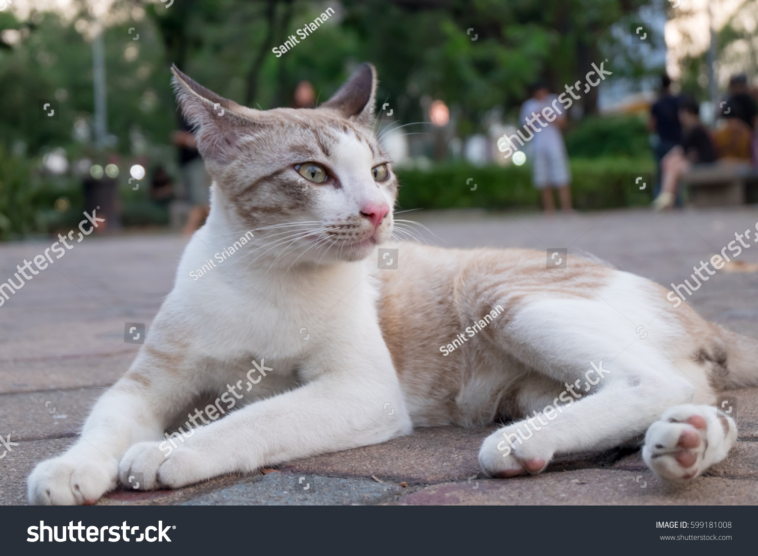 Cute Cat Relaxing Grass Garden Stock Shutterstock