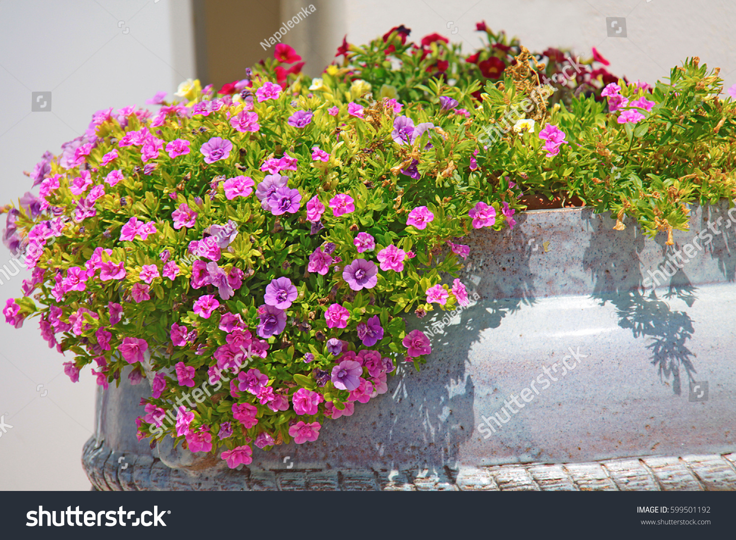 Small pink flowers pot stock photo edit now 599501192 shutterstock small pink flowers in a pot mightylinksfo