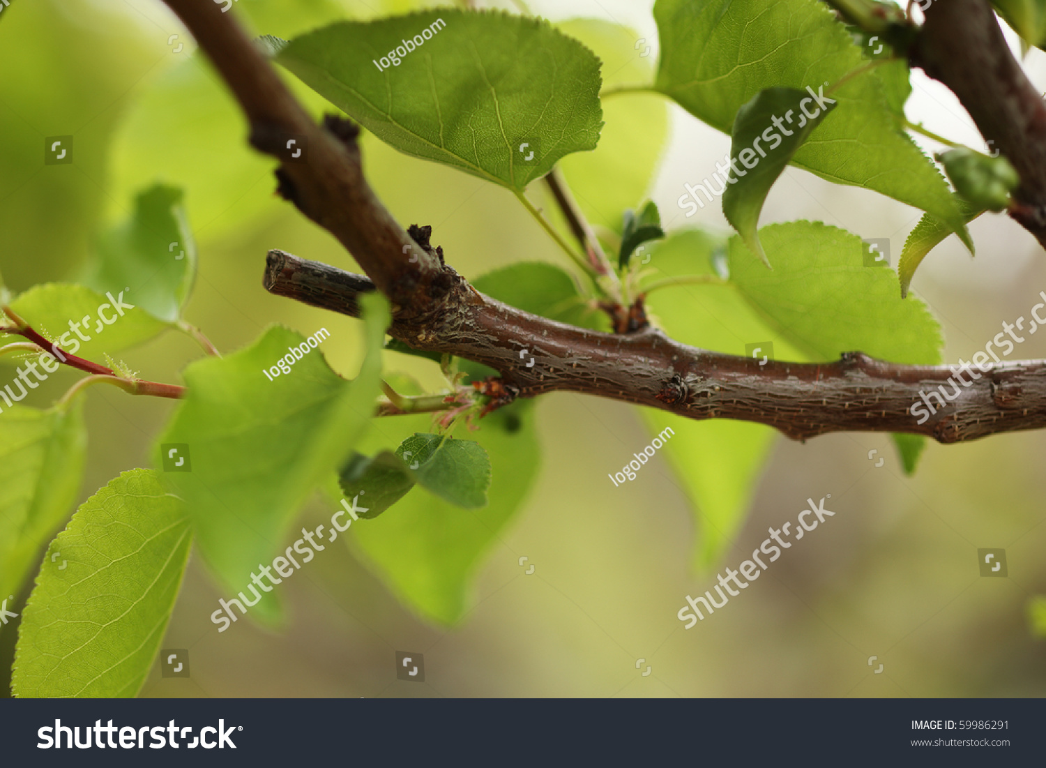 Pruned Tree Branch With Green Leaves. Close-Up, Shallow ...