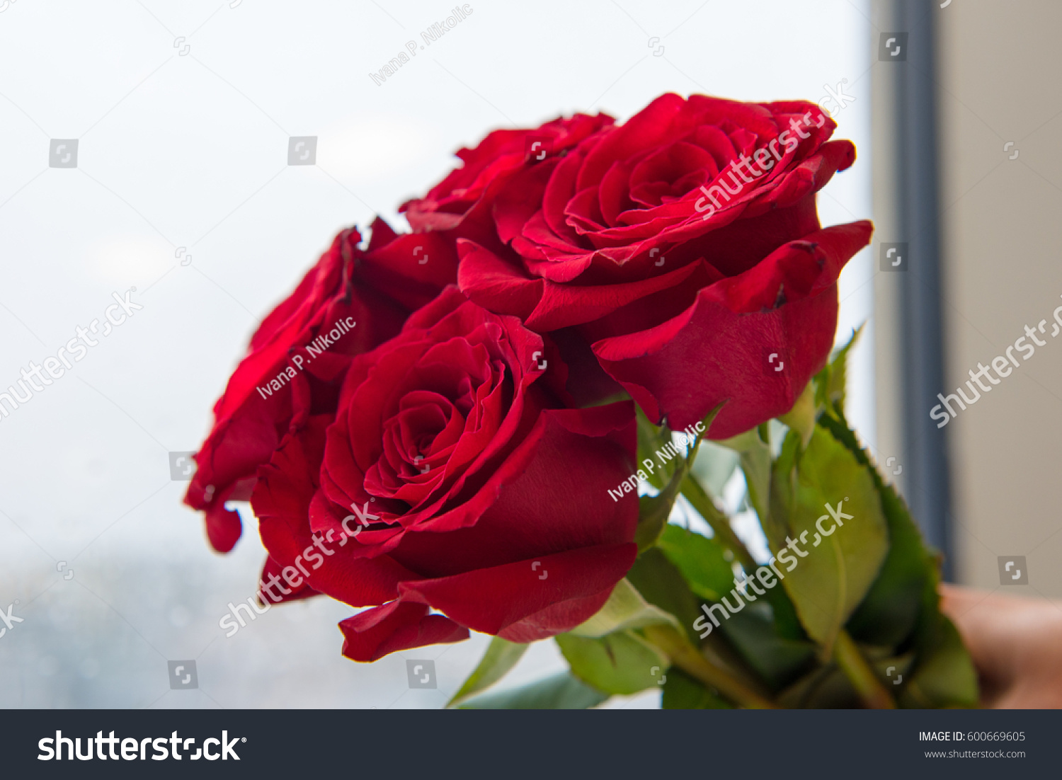 Red Roses Symbol Love On Light Stock Photo Edit Now 600669605