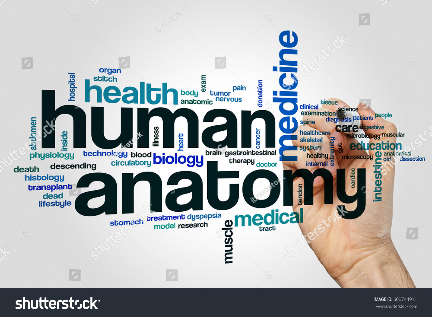 Human Anatomy Word Cloud Concept On Stock Photo Edit Now 600744911
