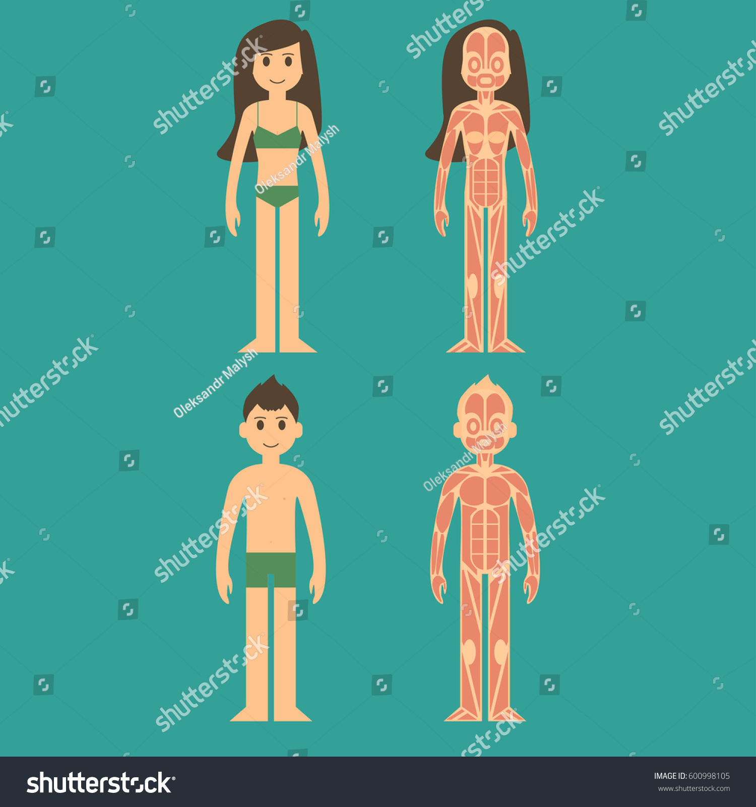 Stylized Male Female Body Anatomy Chart Stock Vector Royalty Free