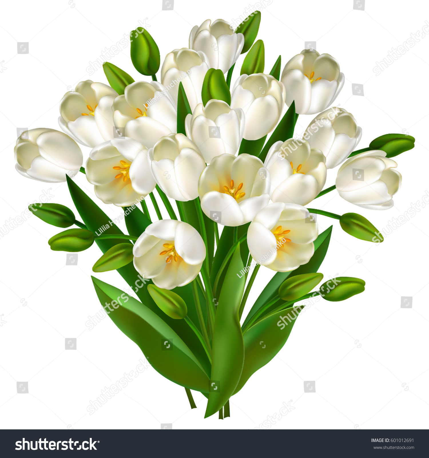 Tulip Flower Isolated Over White Floral Stock Vector Royalty Free