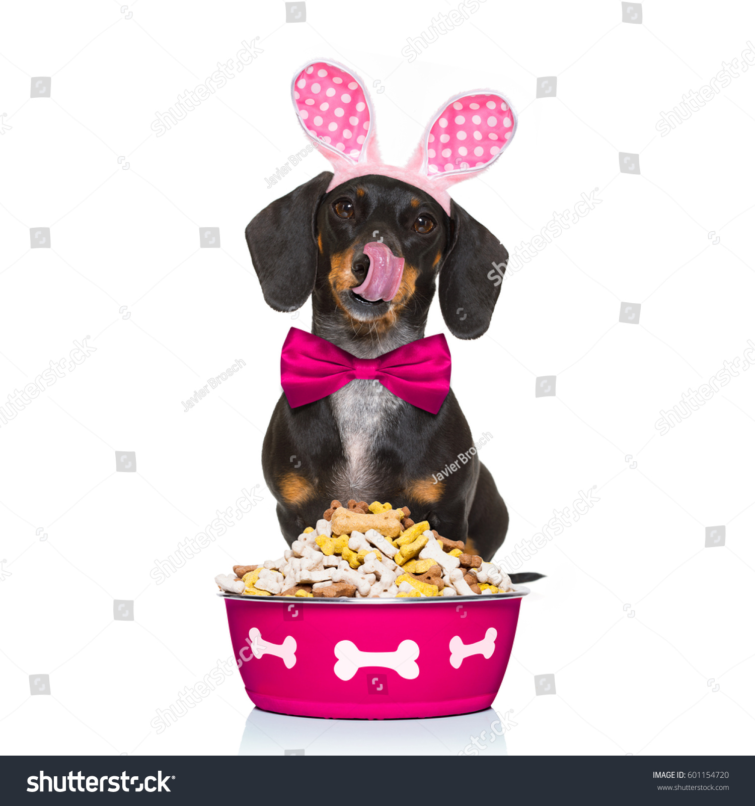 Dry Ears Dog Bowl