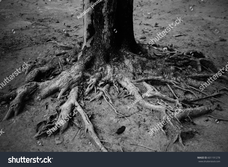 Tree roots black white tone stock photo edit now 601191278