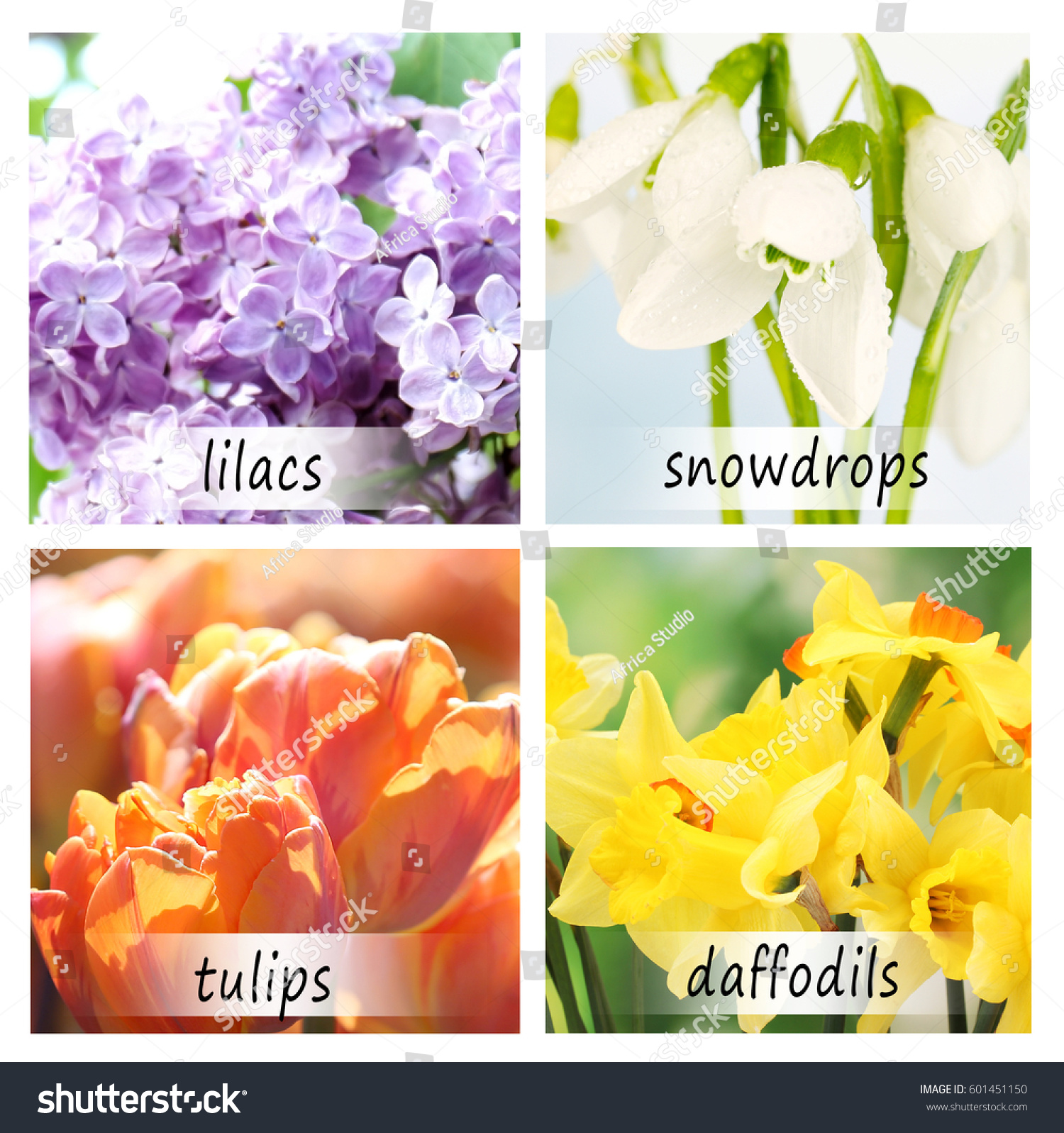 Collage Beautiful Flowers Names Stock Photo Edit Now 601451150