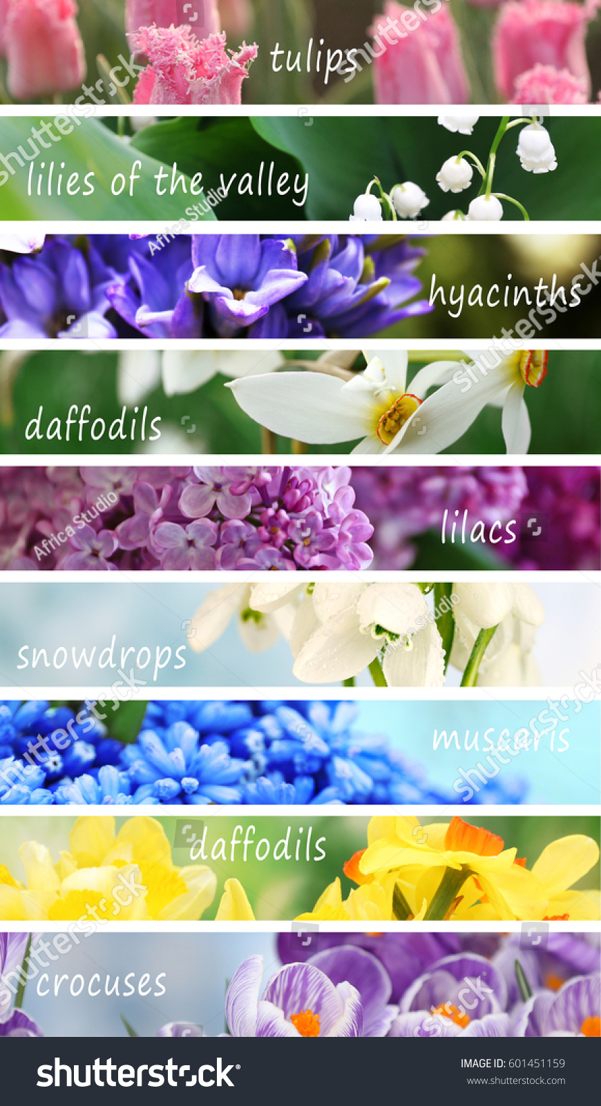 Collage Beautiful Flowers Names Stock Photo Edit Now 601451159