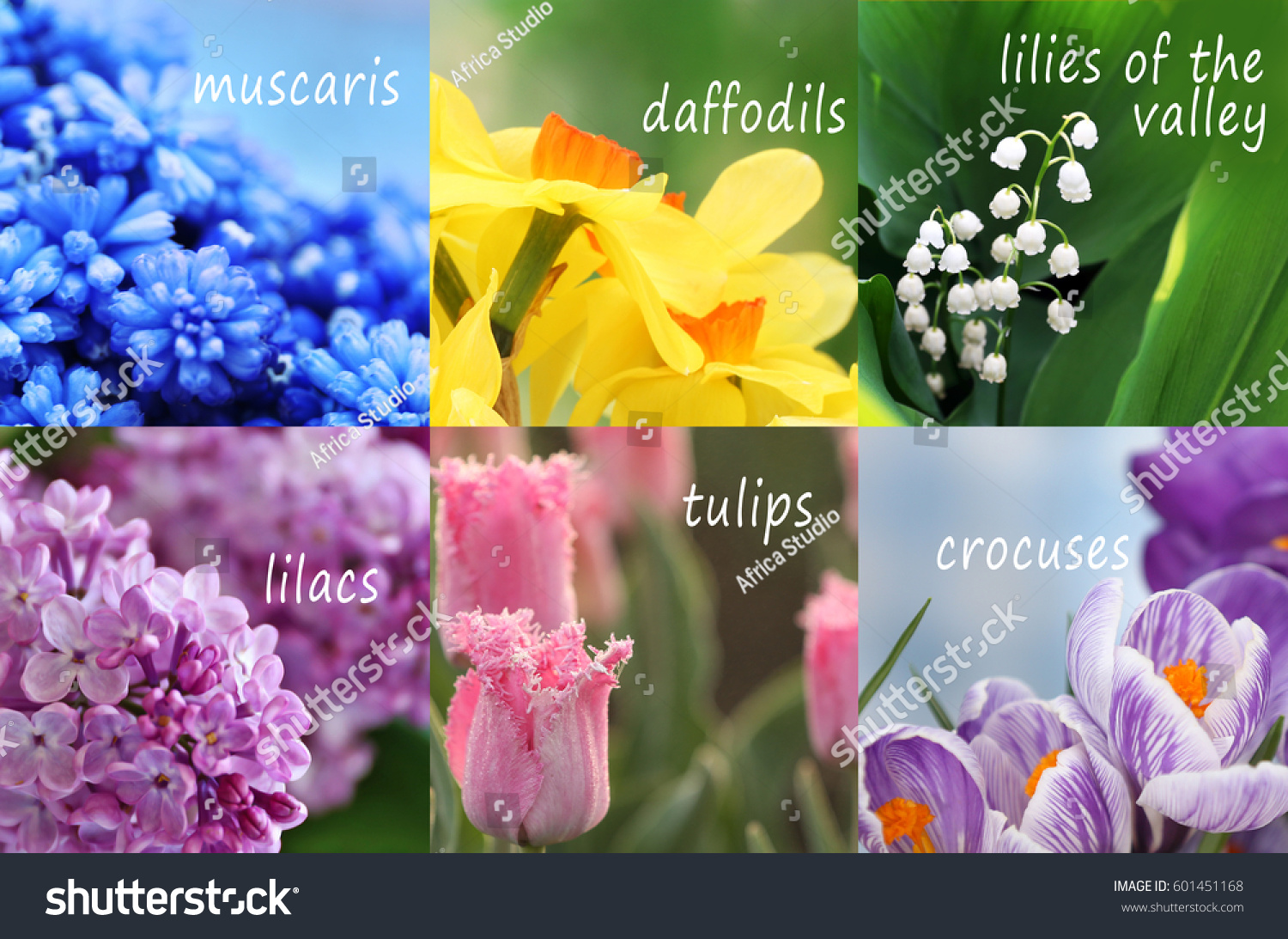 Collage beautiful flowers names stock photo edit now 601451168 collage of beautiful flowers with names izmirmasajfo