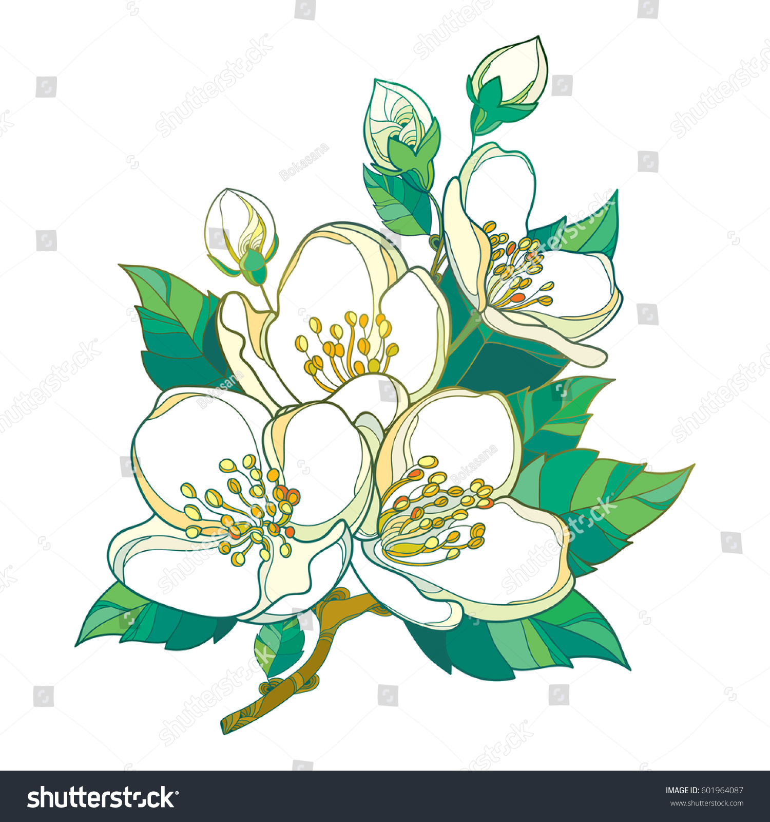 Vector Branch Outline Pastel Jasmine Flowers Stock Vector Royalty