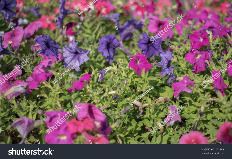 Spring Flowers Bloom In Spring Season Ez Canvas